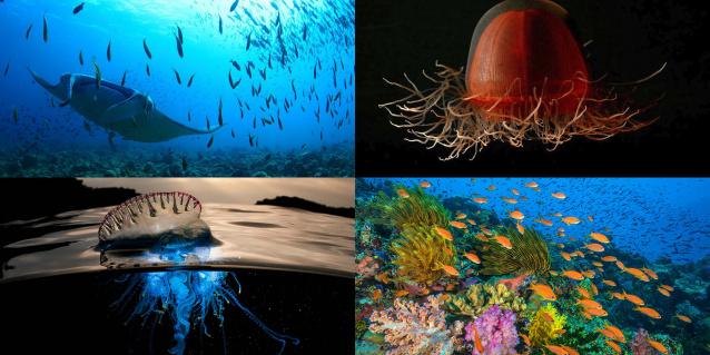 Блог им. Chief: океан, голубая планета, сериал про океан, документальный сериал, сериал о природе